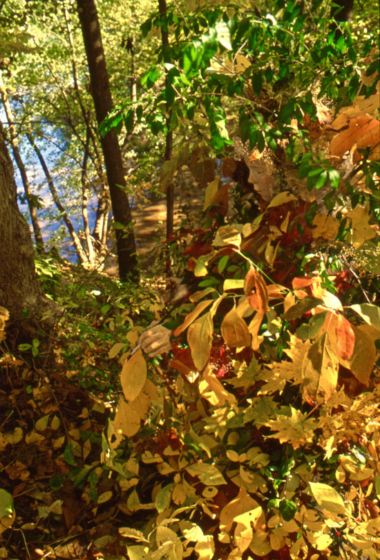 Autumn Fairy // New Hope, PA