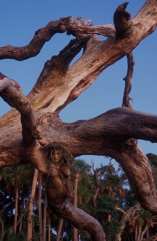 Fallen Tree // Florida