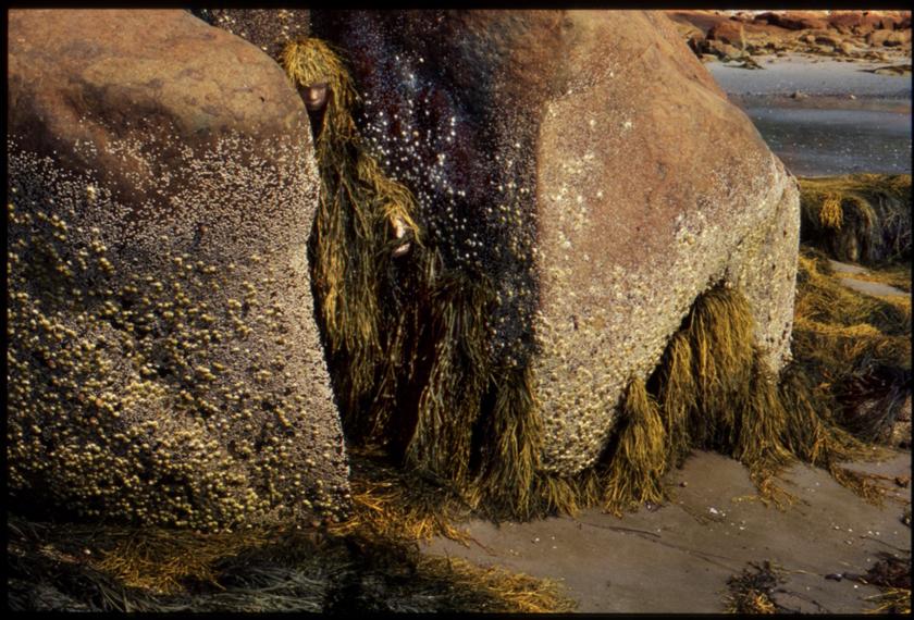 Seaweed // Place