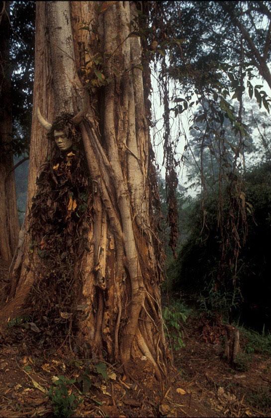 Fallen Tree // Thailand