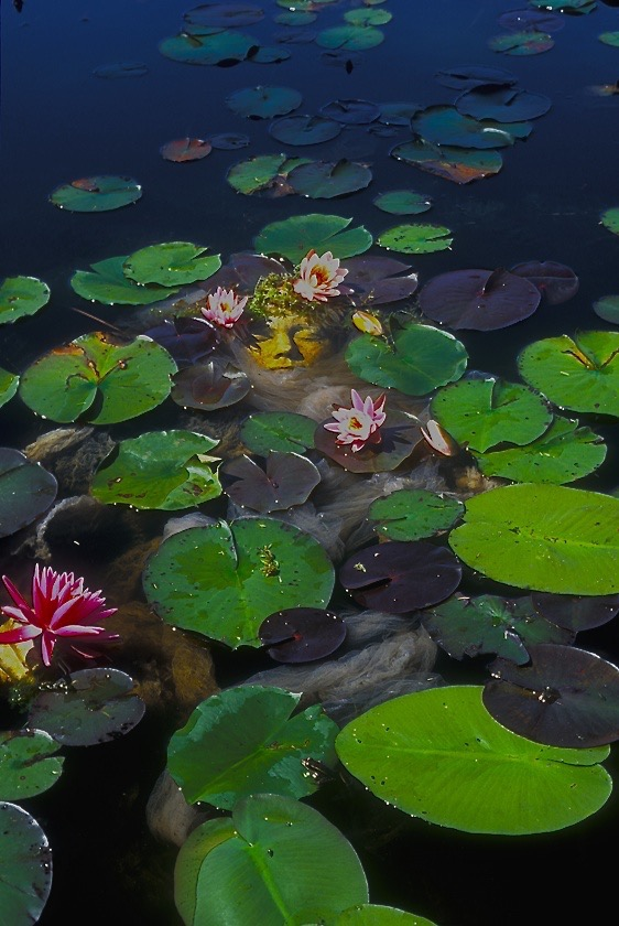 Lily Pond // Place